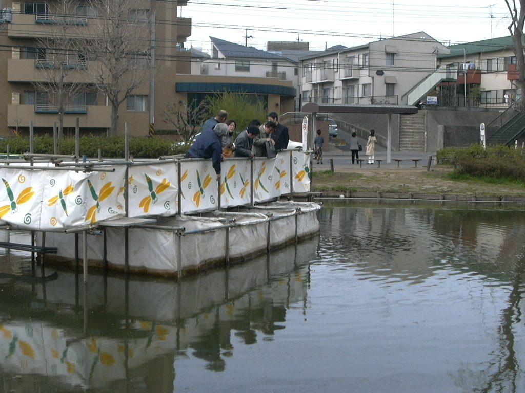 閉鎖性水域の水質浄化(桜台公園)