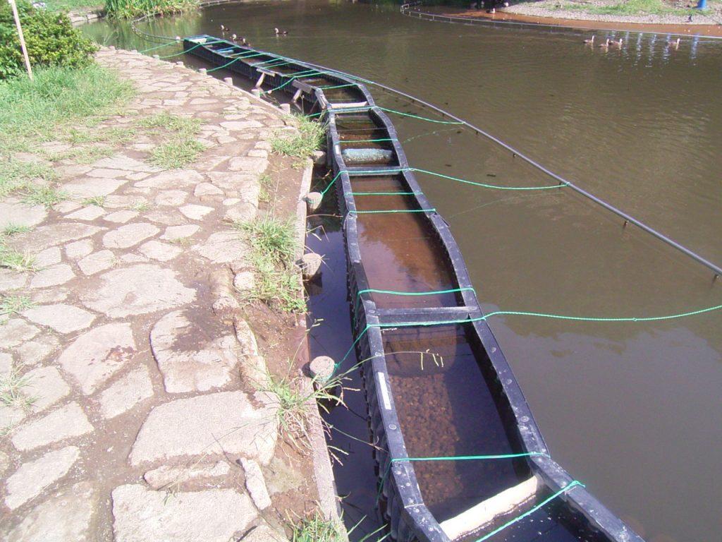 池の浄化から水槽浄化パック開発