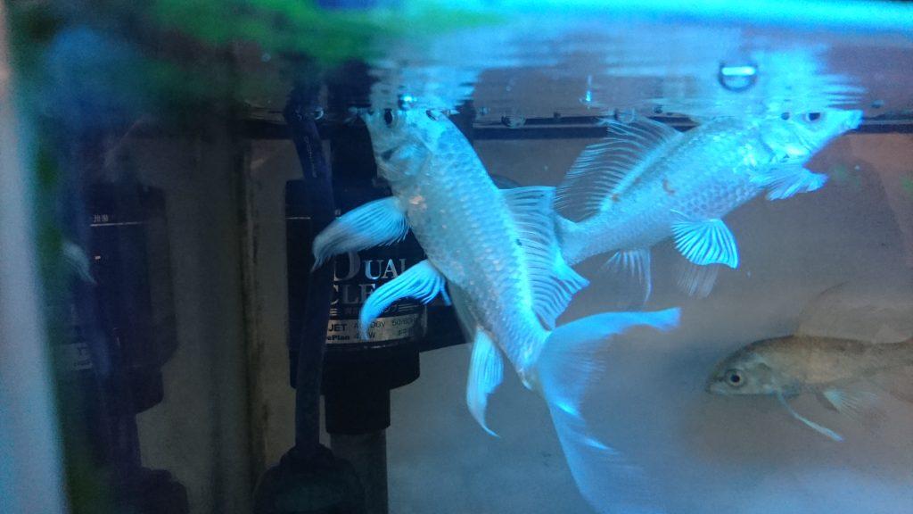 熱帯魚日ごろの観察