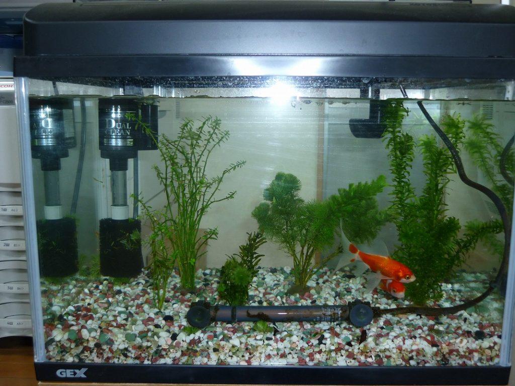 熱帯魚、金魚の水槽